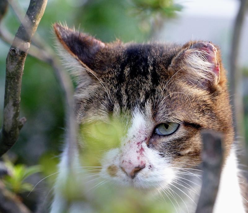 ブッシュの猫2