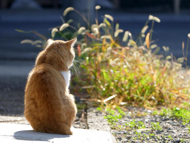 朝日と猫の後ろ姿1