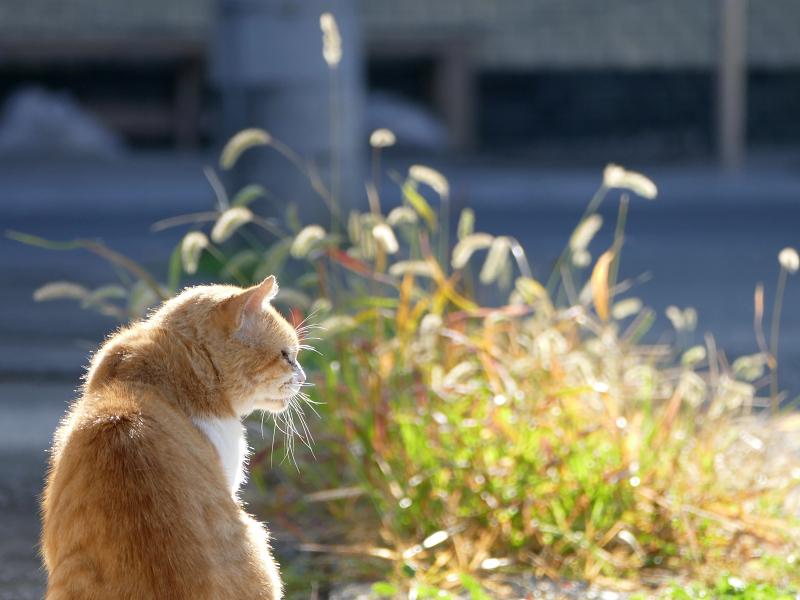 朝日と猫の後ろ姿2