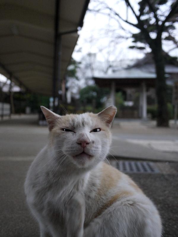 通路でカキカキする白茶猫