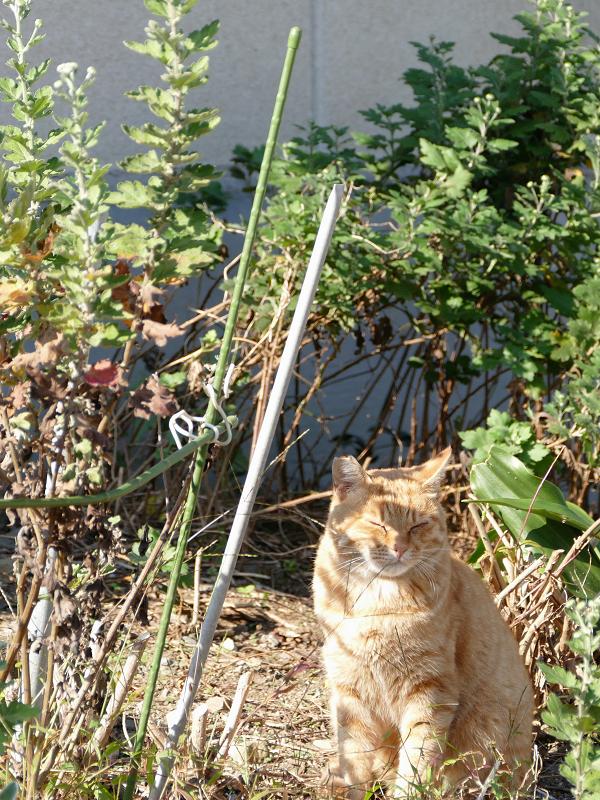 空き地と猫1