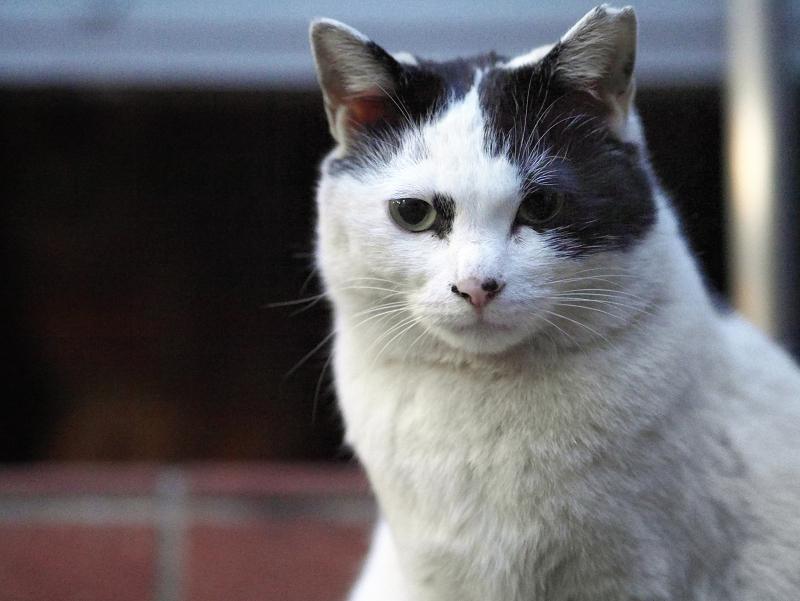 夕暮れとレンガと支柱と白黒猫1
