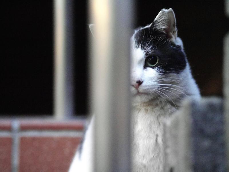 夕暮れとレンガと支柱と白黒猫2