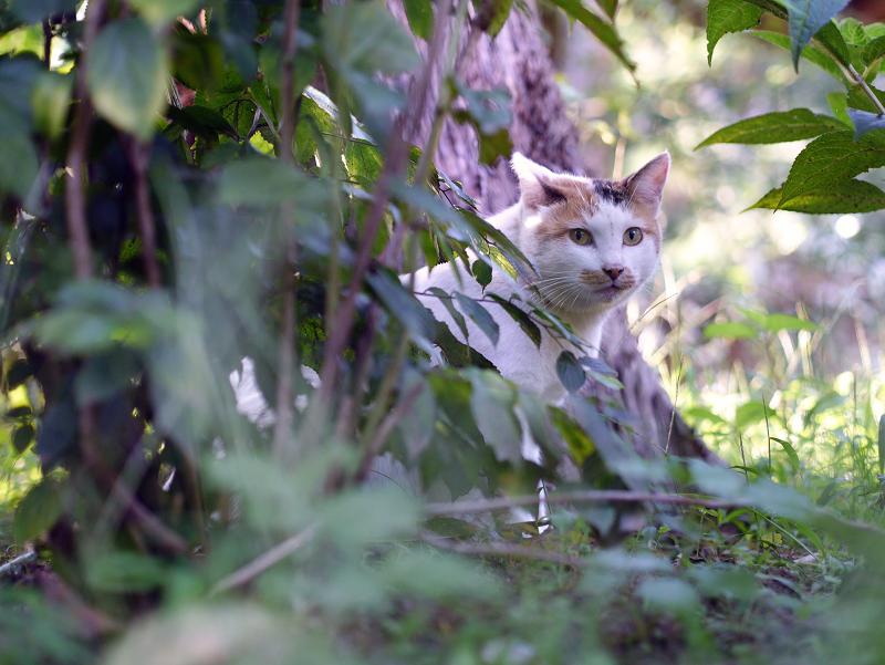 草木の中のネコ
