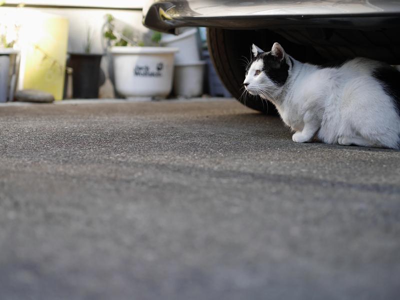 自家用車と猫