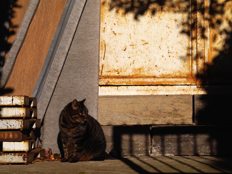 お堂と夕陽とキジトラ猫1