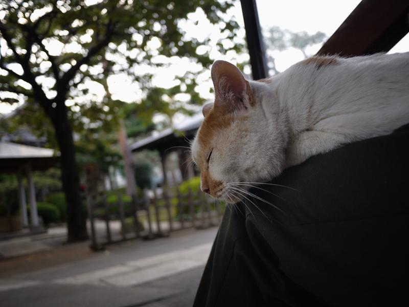 膝の上の友だち猫