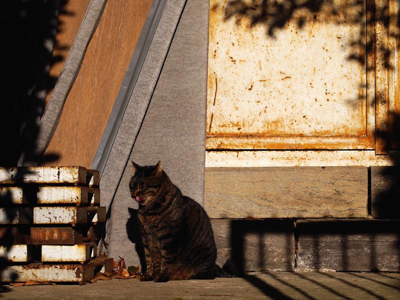 お堂と夕陽とキジトラ猫2
