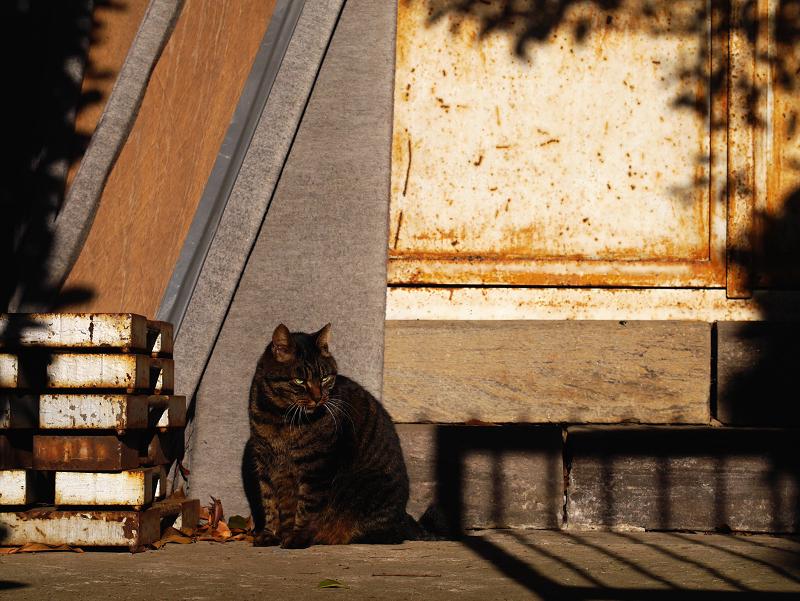 お堂と夕陽とキジトラ猫3