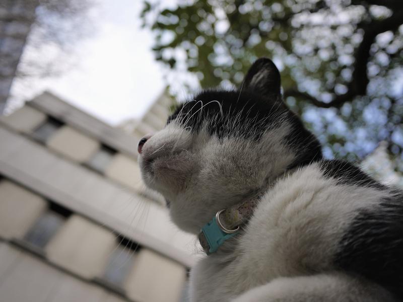 膝に乗った友だち黒白猫1