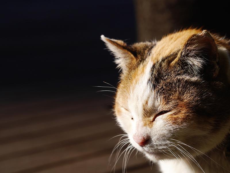 夕陽を浴びて目を閉じる三毛猫3