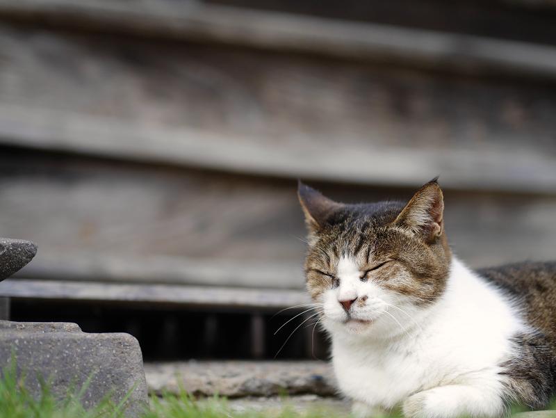 お堂の前庭の猫1