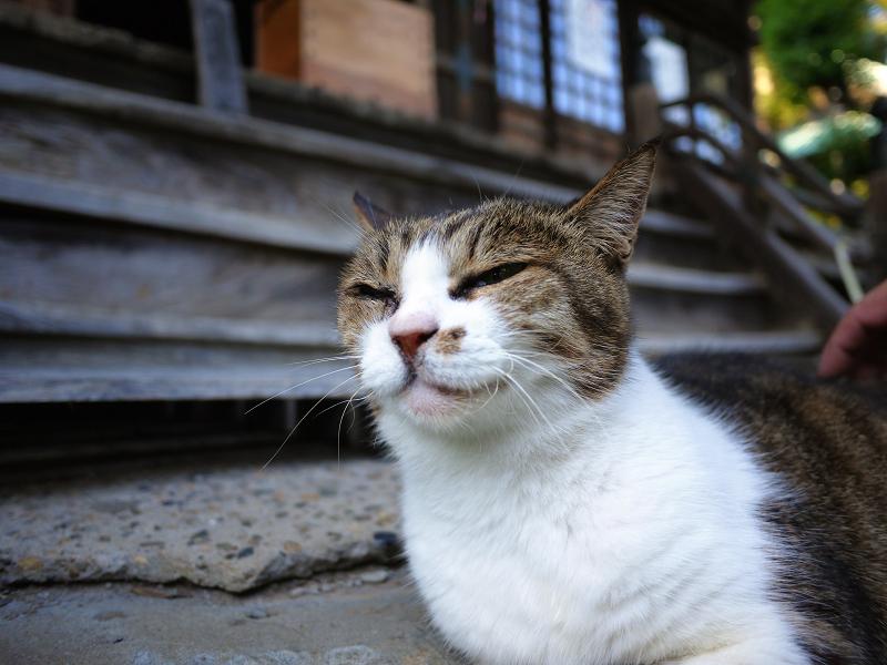 お堂の前庭の猫2
