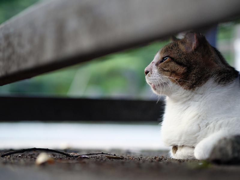 木製ベンチの下にいる猫