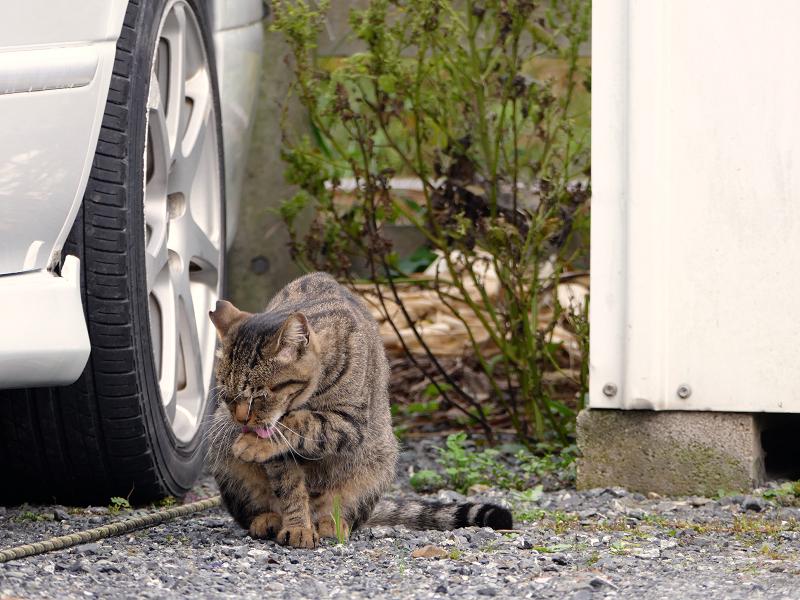 青空駐車場とキジトラ猫1