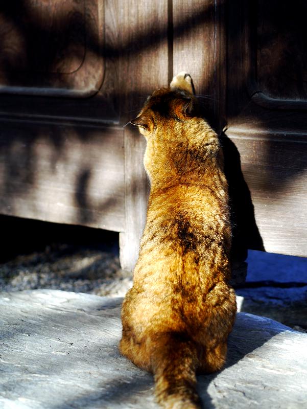 寺門で爪を研ぐサビ柄猫1