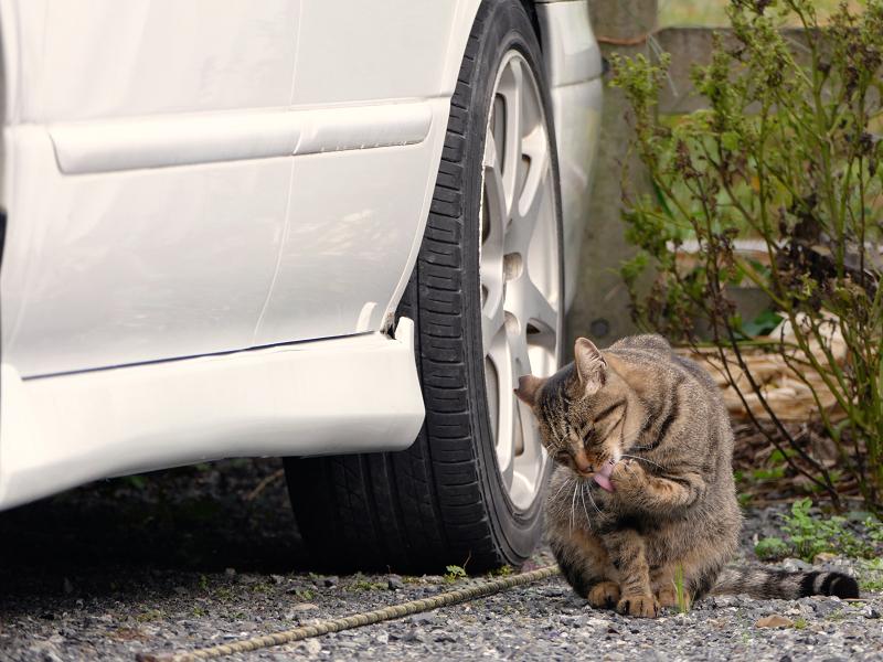 青空駐車場とキジトラ猫2