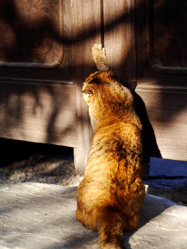 寺門で爪を研ぐサビ柄猫2