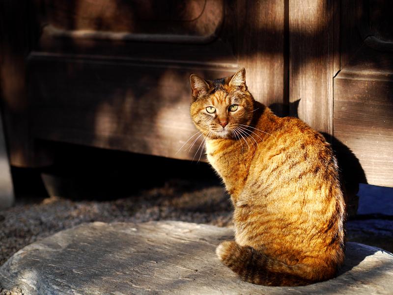 寺門で爪を研ぐサビ柄猫3
