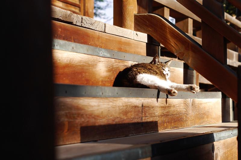 お堂の階段とキジ白猫1
