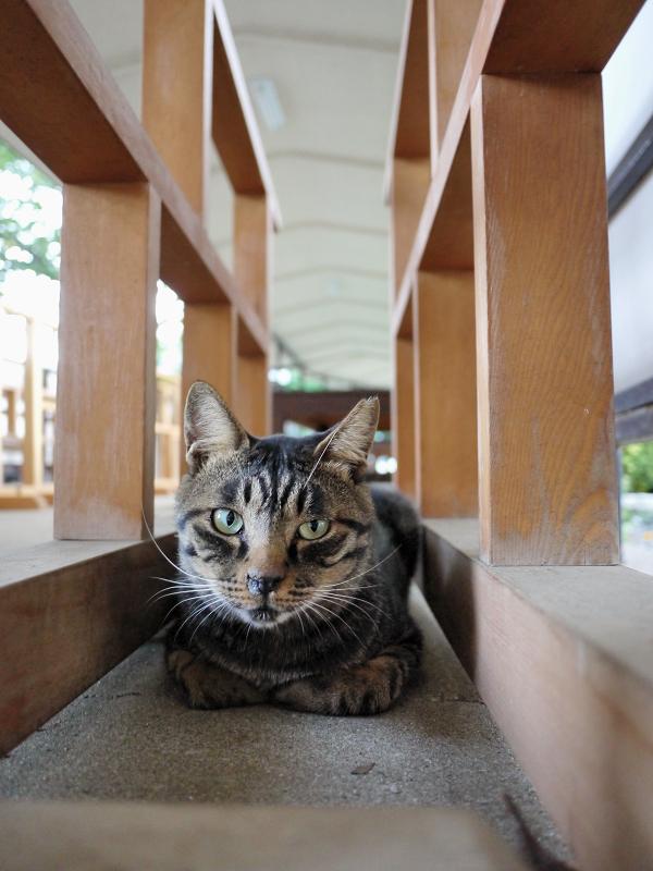 柵の間の猫