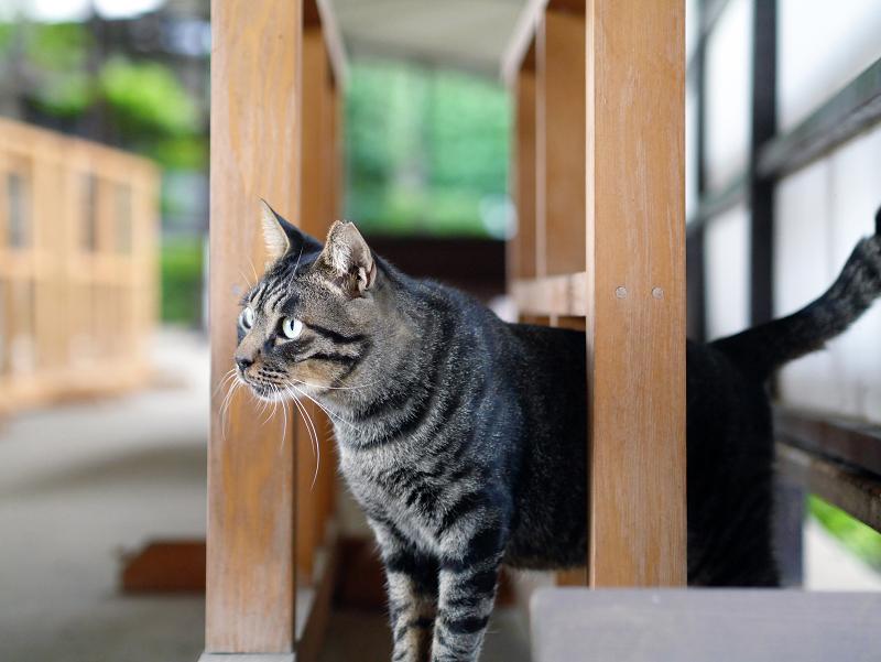 柵と柵の間の猫
