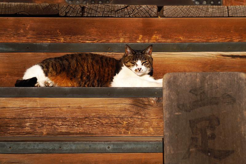 お堂の階段とキジ白猫2