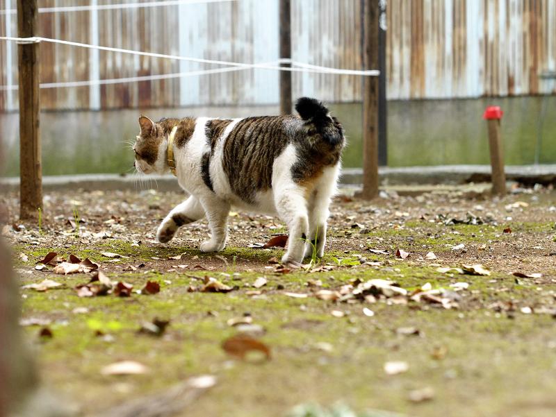 空き地で振り返る猫2