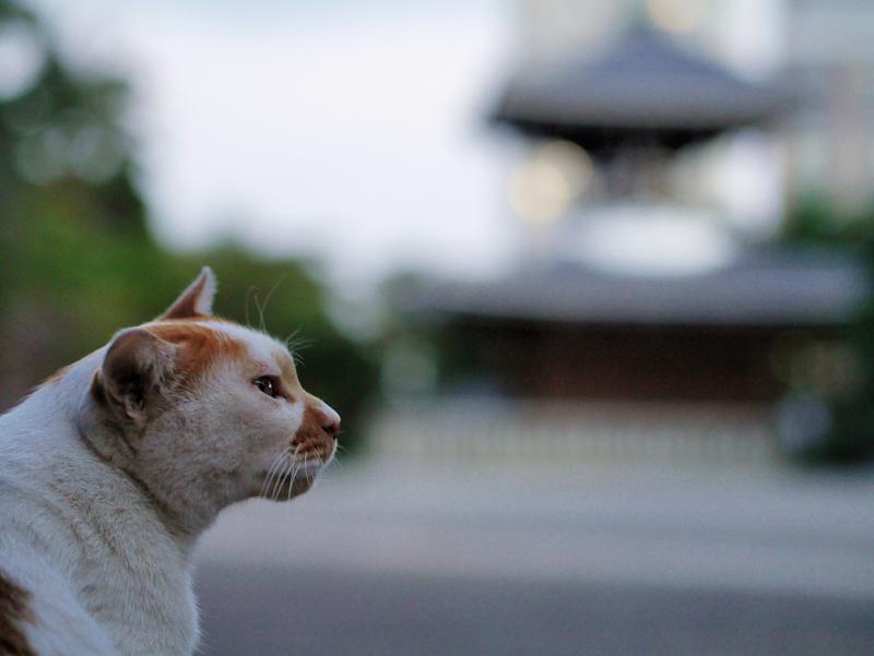 広い境内の猫
