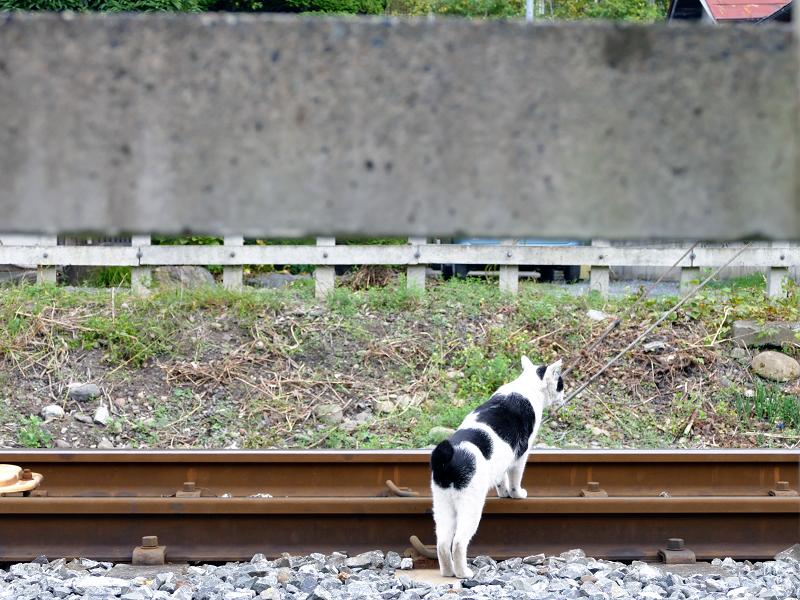 線路を移動する猫1