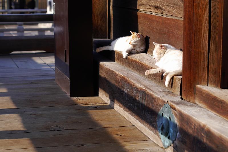 濡れ縁で日向ぼっこの友だち猫