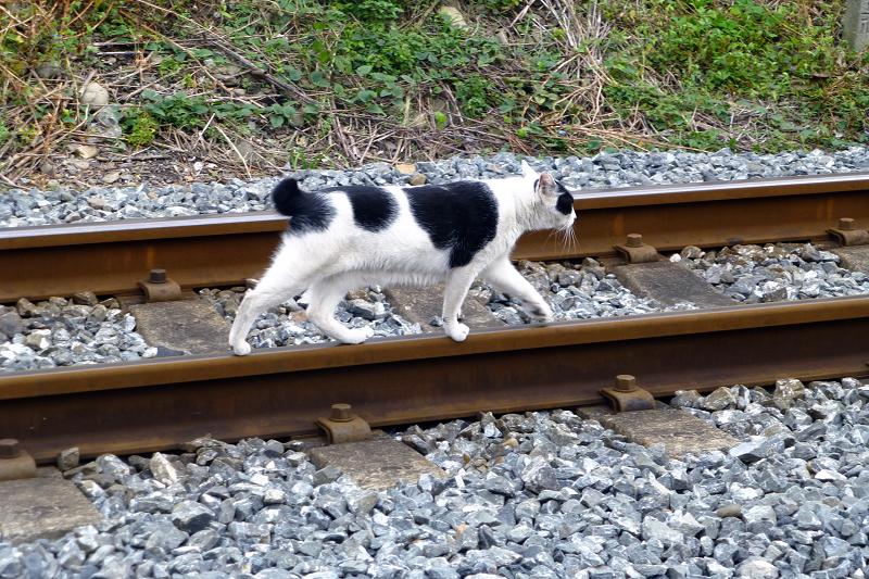 線路を移動する猫2