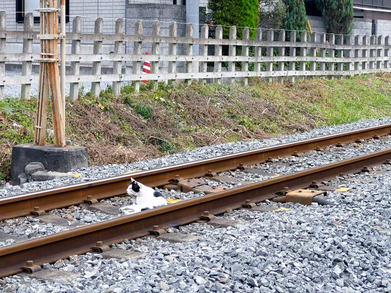 線路を移動する猫3