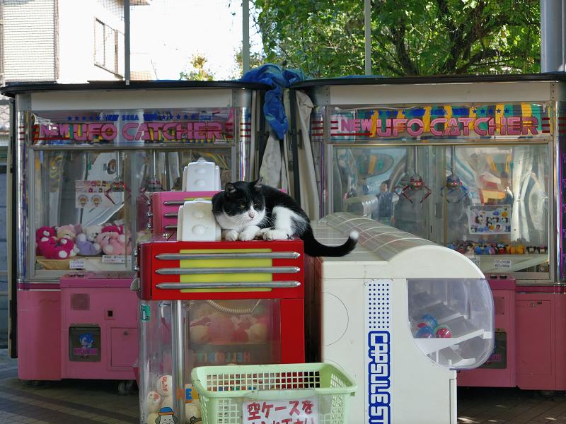 アミューズメントコーナーの黒白猫1