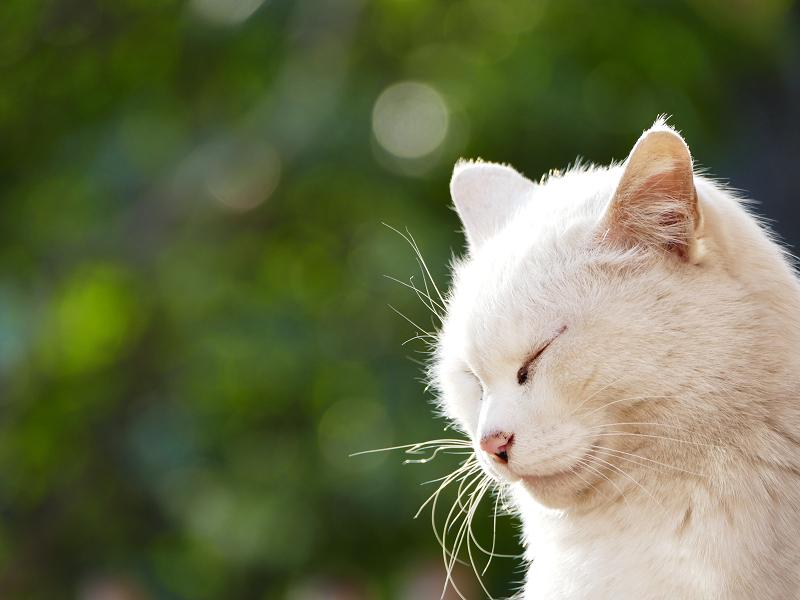 瞑想中の白猫3