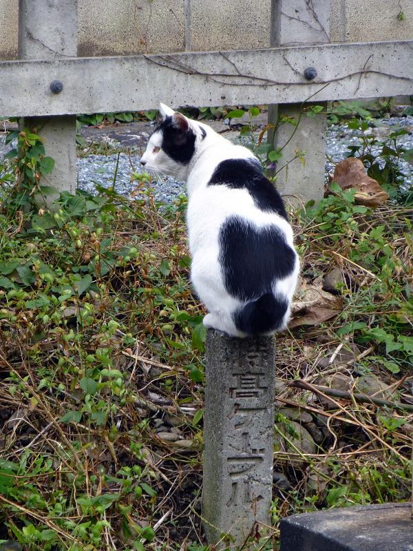 線路と白黒猫1