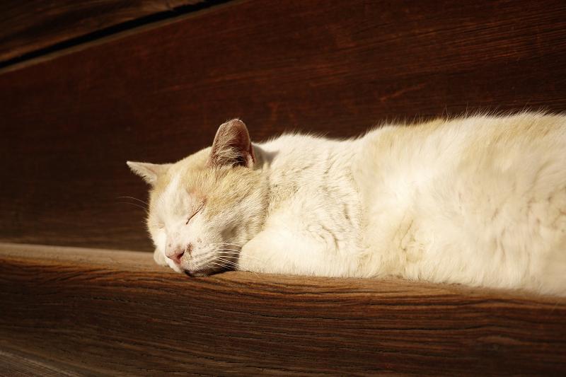 濡れ縁の端で寝ている茶白猫1