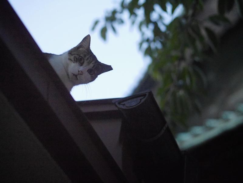 通路の屋根の猫2