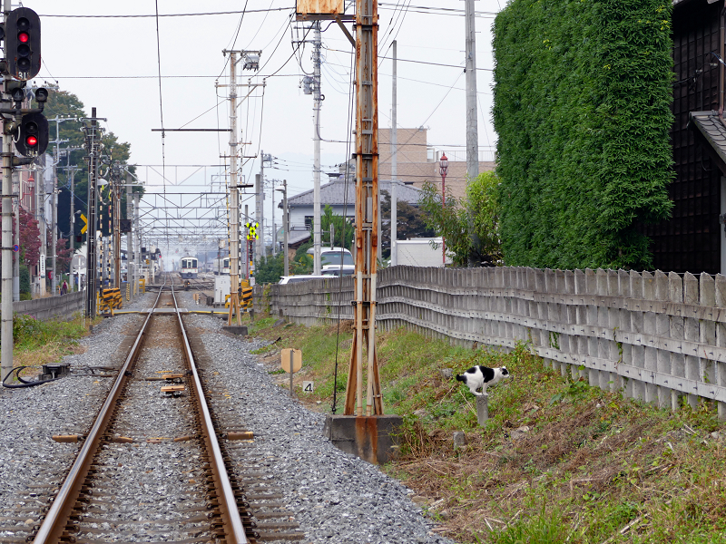 線路と白黒猫2