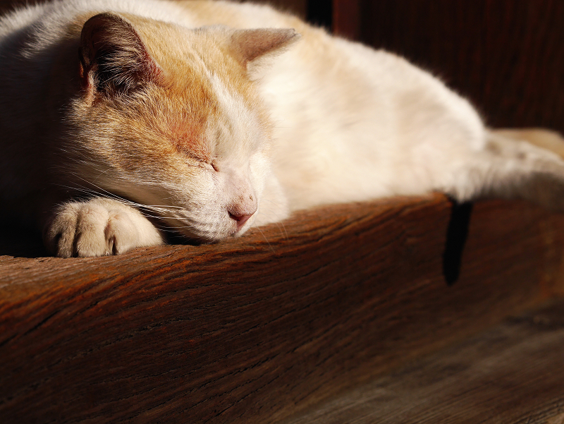 濡れ縁の端で寝ている茶白猫2
