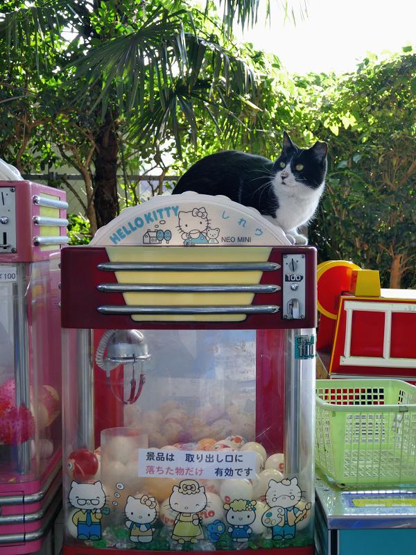 ガチャガチャに乗ってる猫1