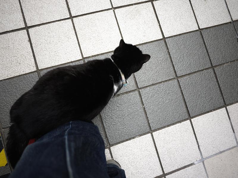 足に体を擦りつける黒白猫1