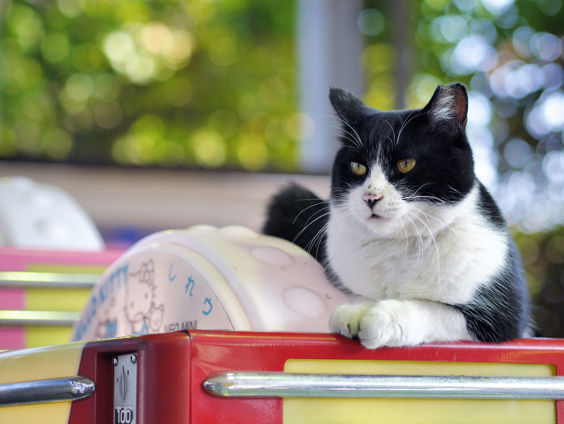 ガチャガチャに乗ってる猫2