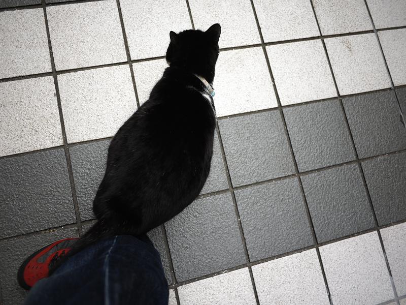 足に体を擦りつける黒白猫2