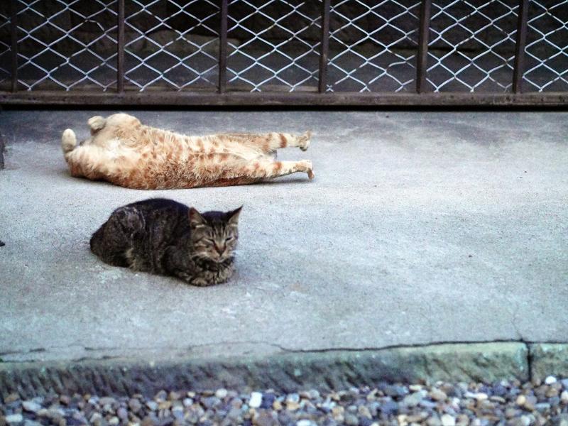 お堂の犬走りの猫たち
