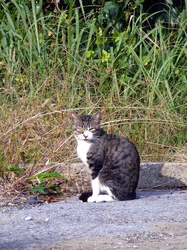 空き地で日を受けてる猫