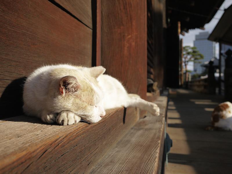 濡れ縁で気持ち良い友だち猫1