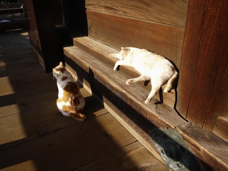 濡れ縁で気持ち良い友だち猫3