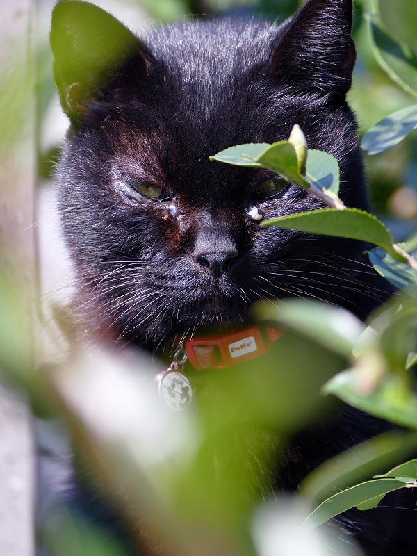 茂みの中の黒猫2