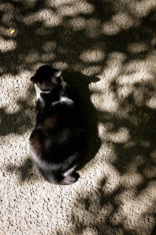 秋の木漏れ日と黒白猫
